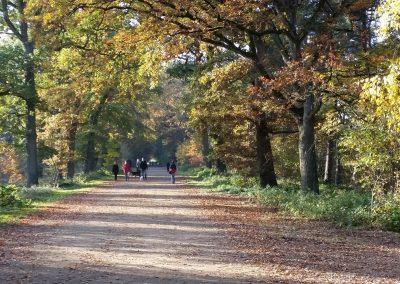 Herbstspaziergang auf dem Hauptweg