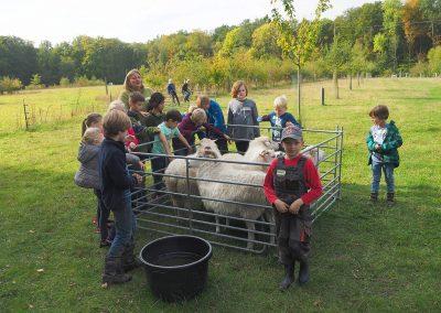 Die Schafe werden bei jeder Freizeit besucht