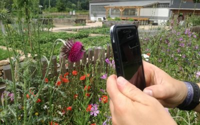 Arten per App bestimmen  – ObsIdentify
