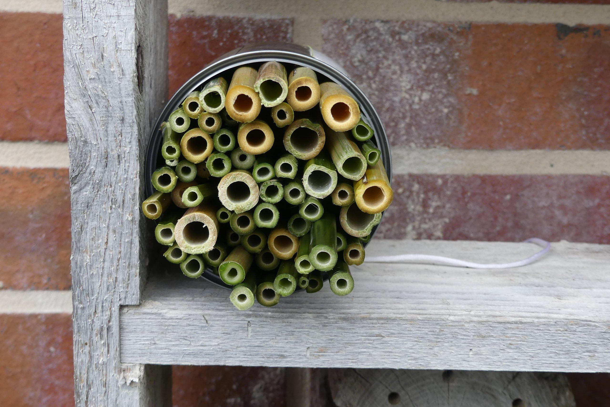 Eine Nisthilfe für Wildbienen die aus Bambus und einer Dose gebaut wurde