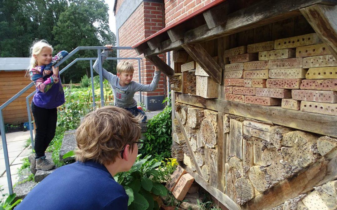 Familien entdecken Wildbienen