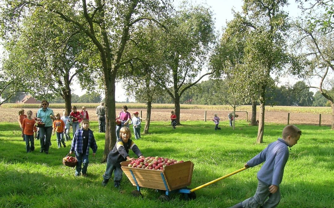 Obst im Schulgarten