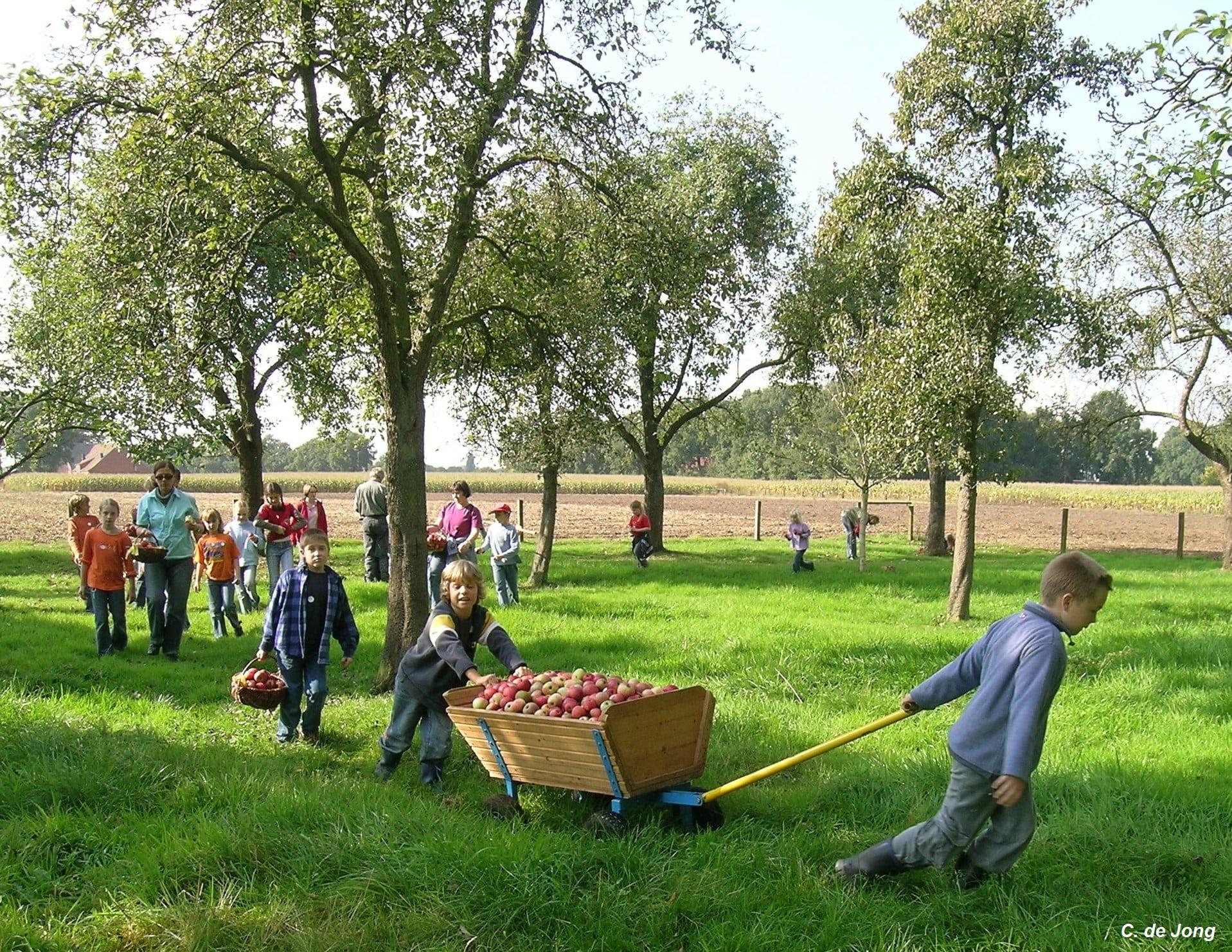 Kinder ziehen einen Bollerwagen mit Äpfeln auf einer Streuobstwiese