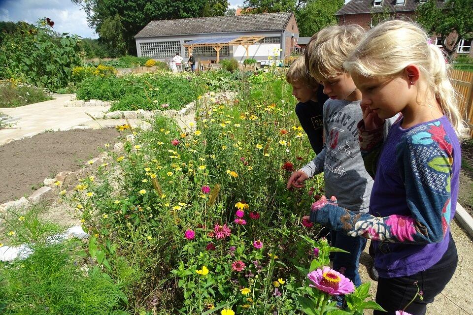 Drei Kinder stehen im Garten vor bienenfreundlichen Blumen