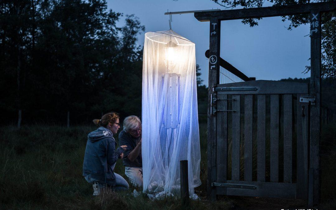 Das große Leuchten – Insektennacht mit öffentlicher Leuchtaktion