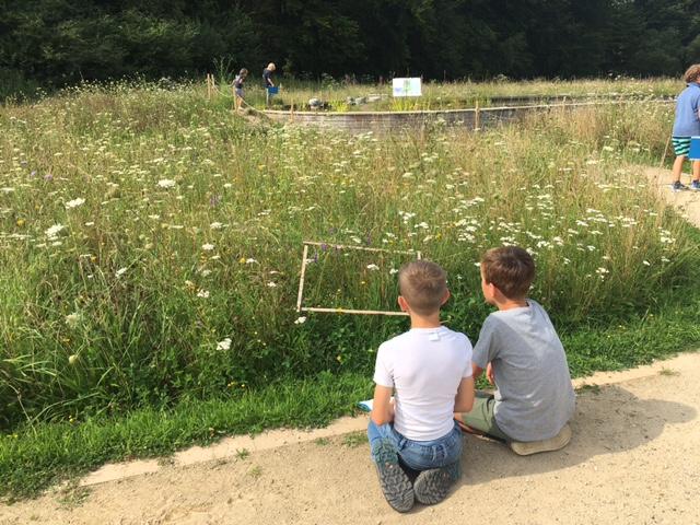 Wildbienen, Schafe & Co. – Sommerferien beim NABU-Münsterland