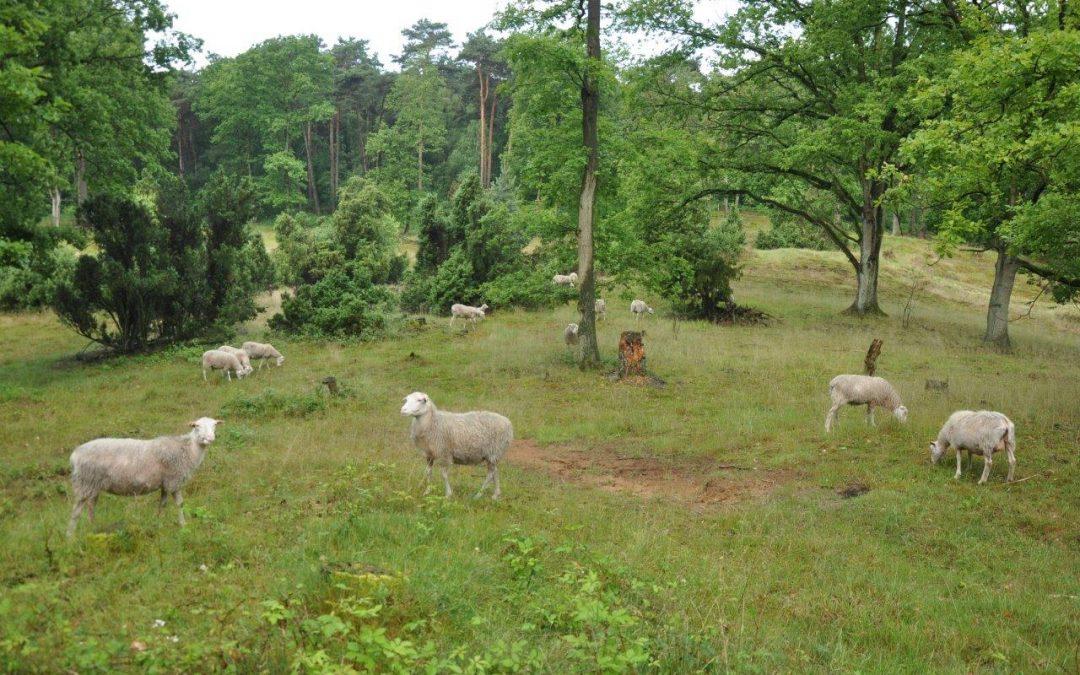 Schäfchen zählen in den Bockolter Bergen