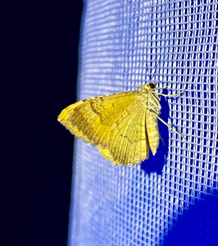 Gelber Schmetterling sitzt an beleuchtetem weißen Nest