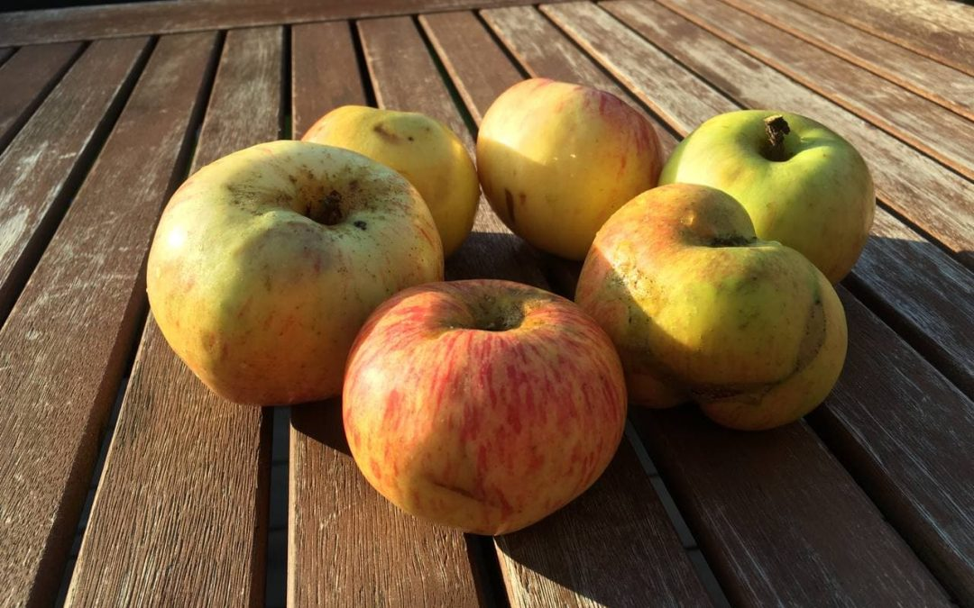 Leckeres aus Äpfeln: Mus, Chips und Ringe