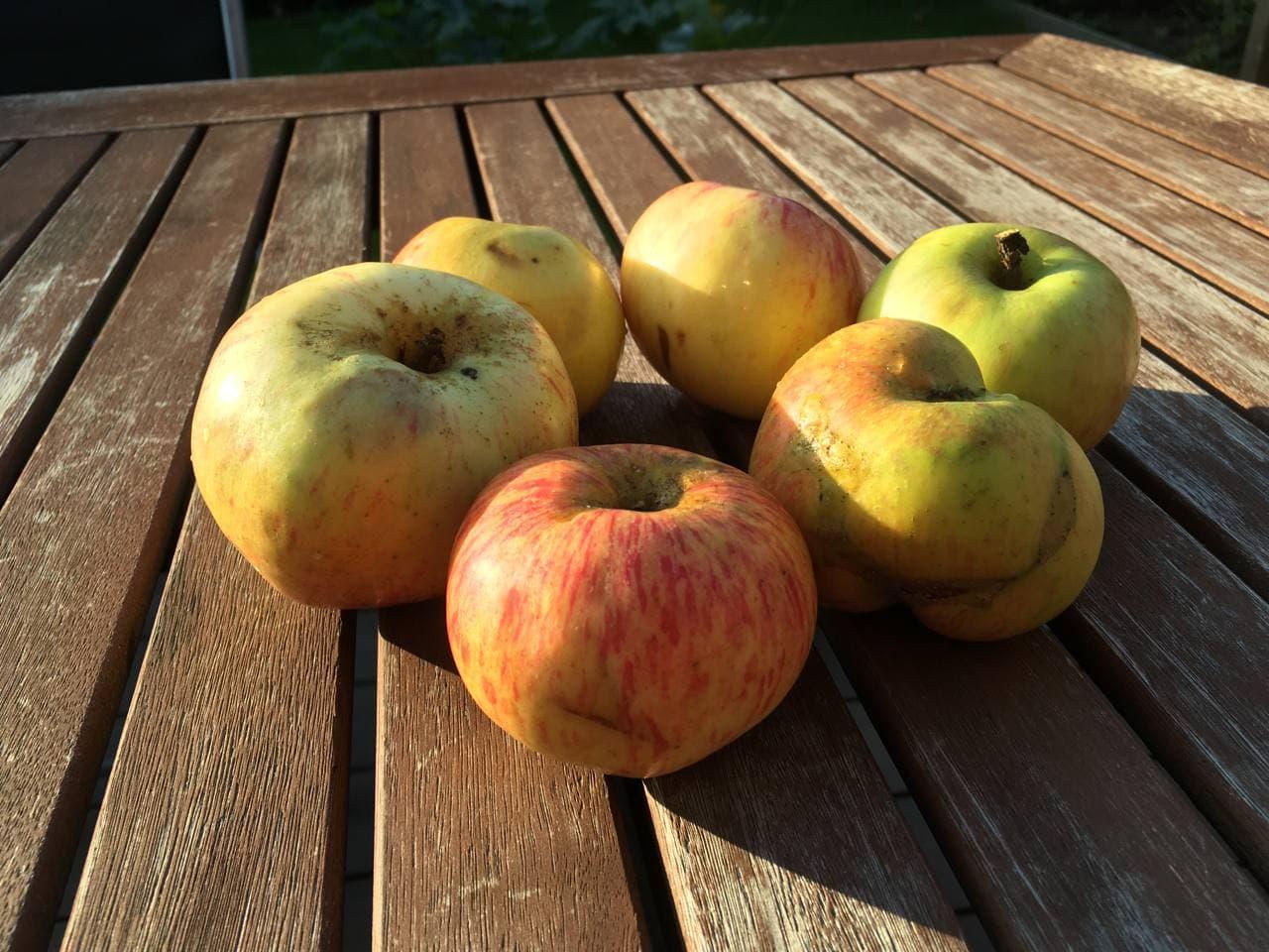 Sechs Äpfel auf einem Holztisch