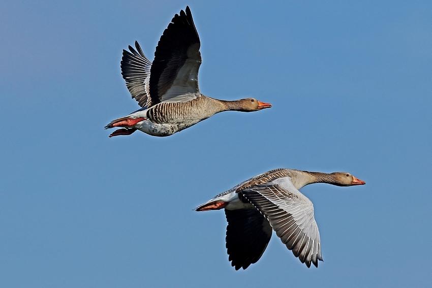 Vogelzug-Seminar am 16. Oktober
